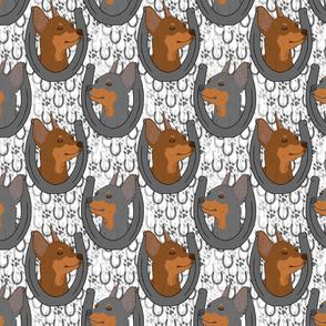 Miniature Pinscher horseshoe portraits B