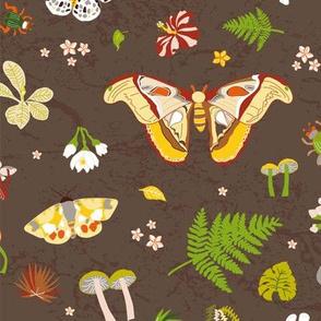 woodland moths dark, small