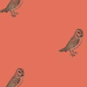 Bewick's Barn Owl Terra Cotta