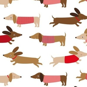 Dachshund with red