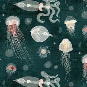 Jellyfish of the deep
