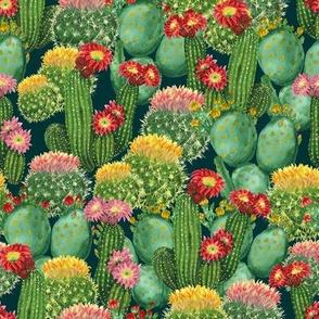 Cactuses, Medium Size