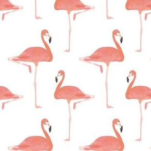 Pink flamingos tropical