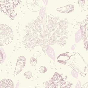 Sea Toile Shell