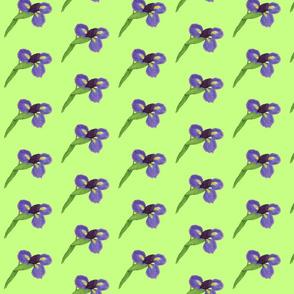 Japanese Iris Blossoms on Green