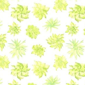 17-15D Watercolor Succulent Lime Green Yellow White Floral Southwest Spring Botanical _Miss Chiff Designs