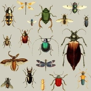BUGS COLLECTION / VINTAGE / TAN