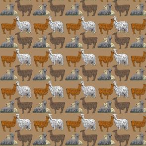 love_llamas_tan_4x4