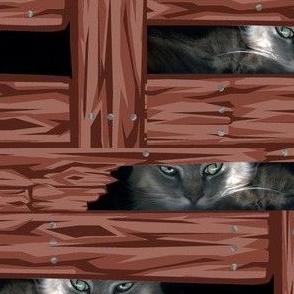 Cats' Eyes