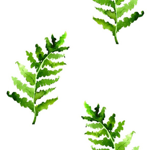 Fern in watercolor on the white