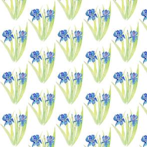 Flower Garden of Spring Irises