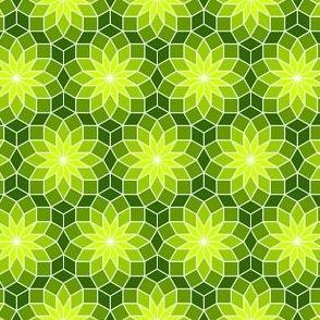 06245562 : SC3Vrhomb : verdant