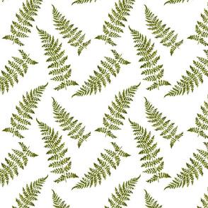 vintage_ferns