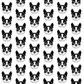 tiny boston-terrier-faces