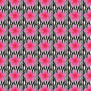 Zebra Sizzler