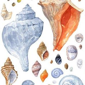 New England Seashells watercolor