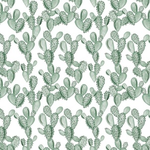 green paddle cactus // small