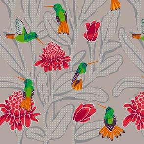 hummingbirds + torch ginger [cafe dot]