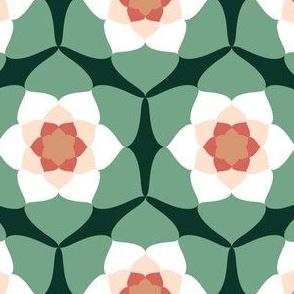 06280446 : arcos6 : succulent