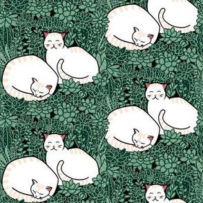 Cats in a succulent garden