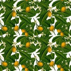 Lemon Botanical ~ White ~ Small