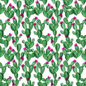 emerald cactus + rose // small