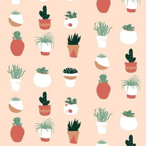 Potted Succulents in Blush Pink // Cacti and Terracotta pots // Desert Chic by Zoe Charlotte