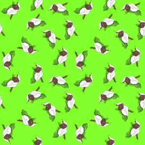 greenspindles