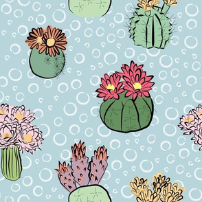 Cactus flower multi color