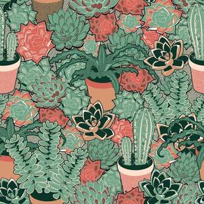 Succulents&cacti