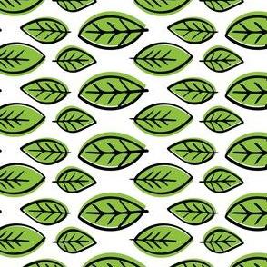 Green Citrus Leaves