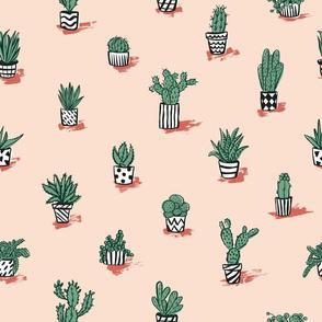 Mediterranean cacti collection