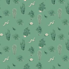 succulents_sage