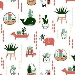 Cactus in planters