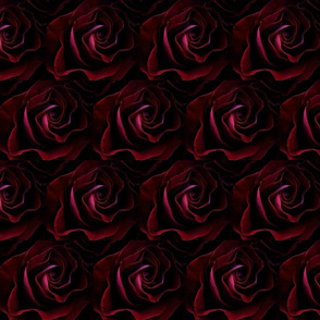 Rose In Shadow
