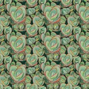 Lime Zinger Sedum Too