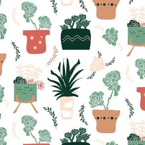 Succulents Fun!