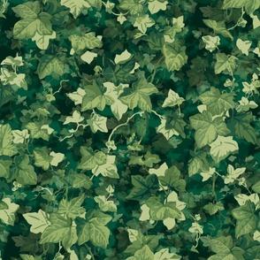 English Ivy ~ Lush