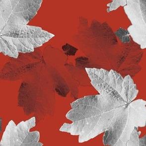 Blood Orange Maples- layered