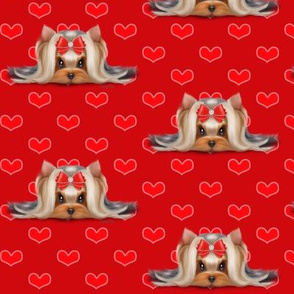 Yorkie Beauty red hearts red M