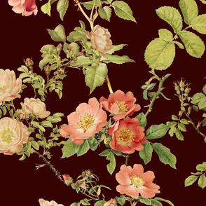 English Rose ~  Portfolio