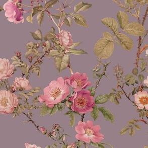 English Rose ~  Prince Regent