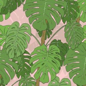 Monstera jungle_pink