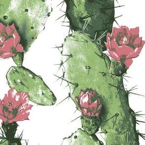 Desert White Cactus Flower
