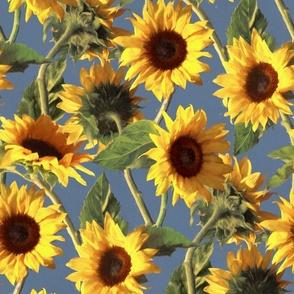 Sunflowers on Light Blue