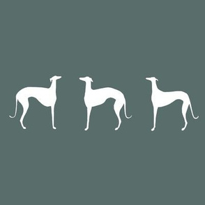 white sighthounds
