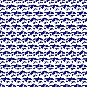 killer whale blue