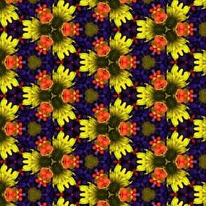 bright_blue_yellow_orange_flowers