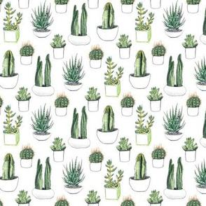 Watercolour Cacti & Succulents - Smaller