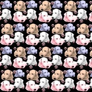 Pastel Labrador Retrievers